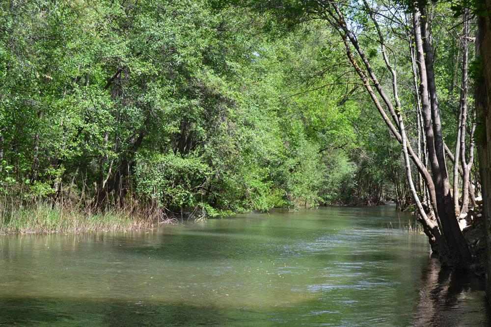 Río Jarama antes de llegar al puente